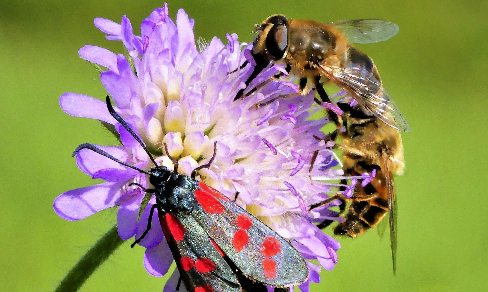 Flora und Fauna NSV Hellikon